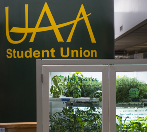 The hydroponic garden in the UAA Student Union.