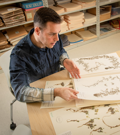 Justin Fulkerson, lead botanist for the University of Alaska Anchorage Herbarium, displays specimens from the extensive collection. (Photo by James Evans / University of Alaska Anchorage)