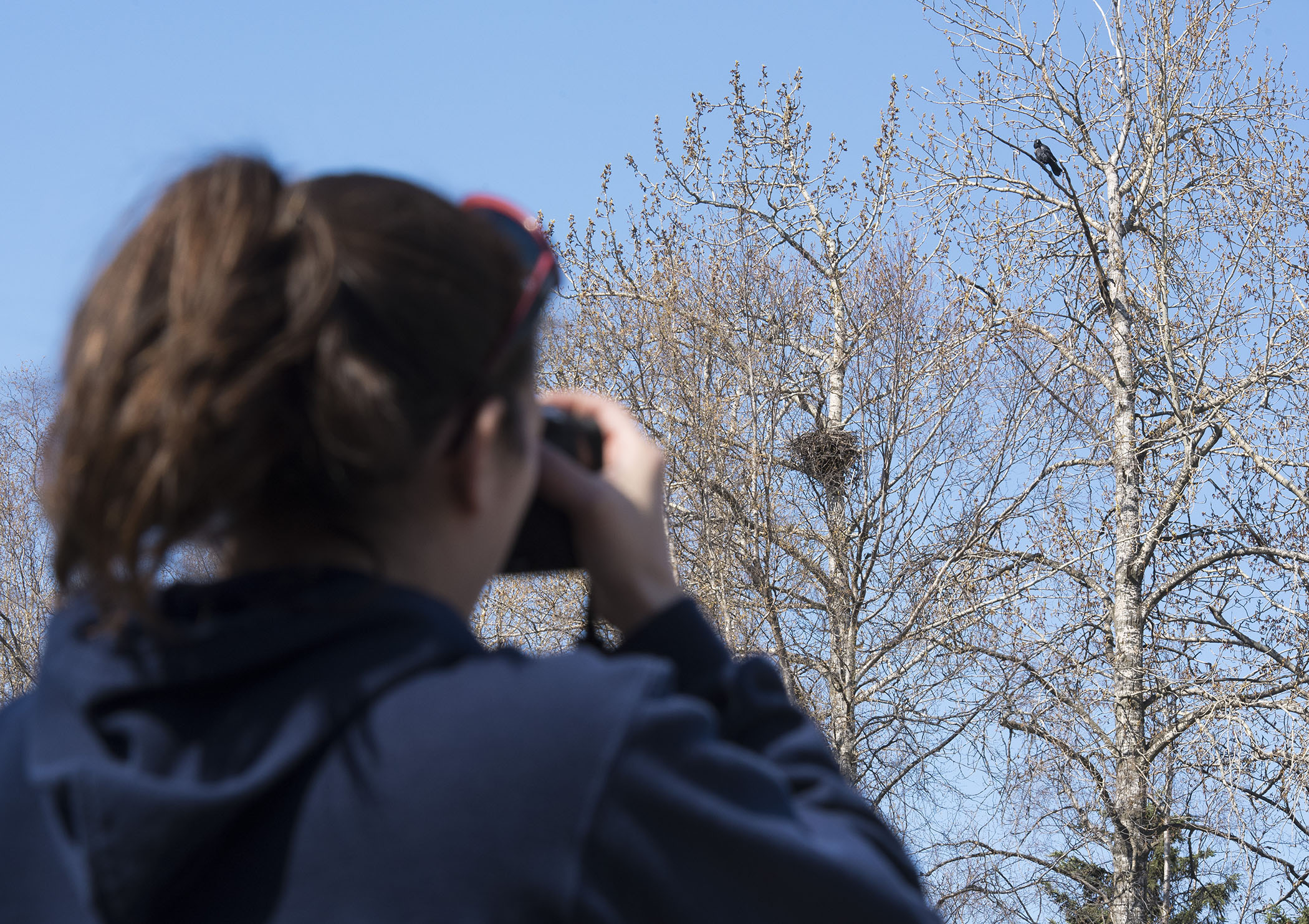AERC partners monitor an active raven nest