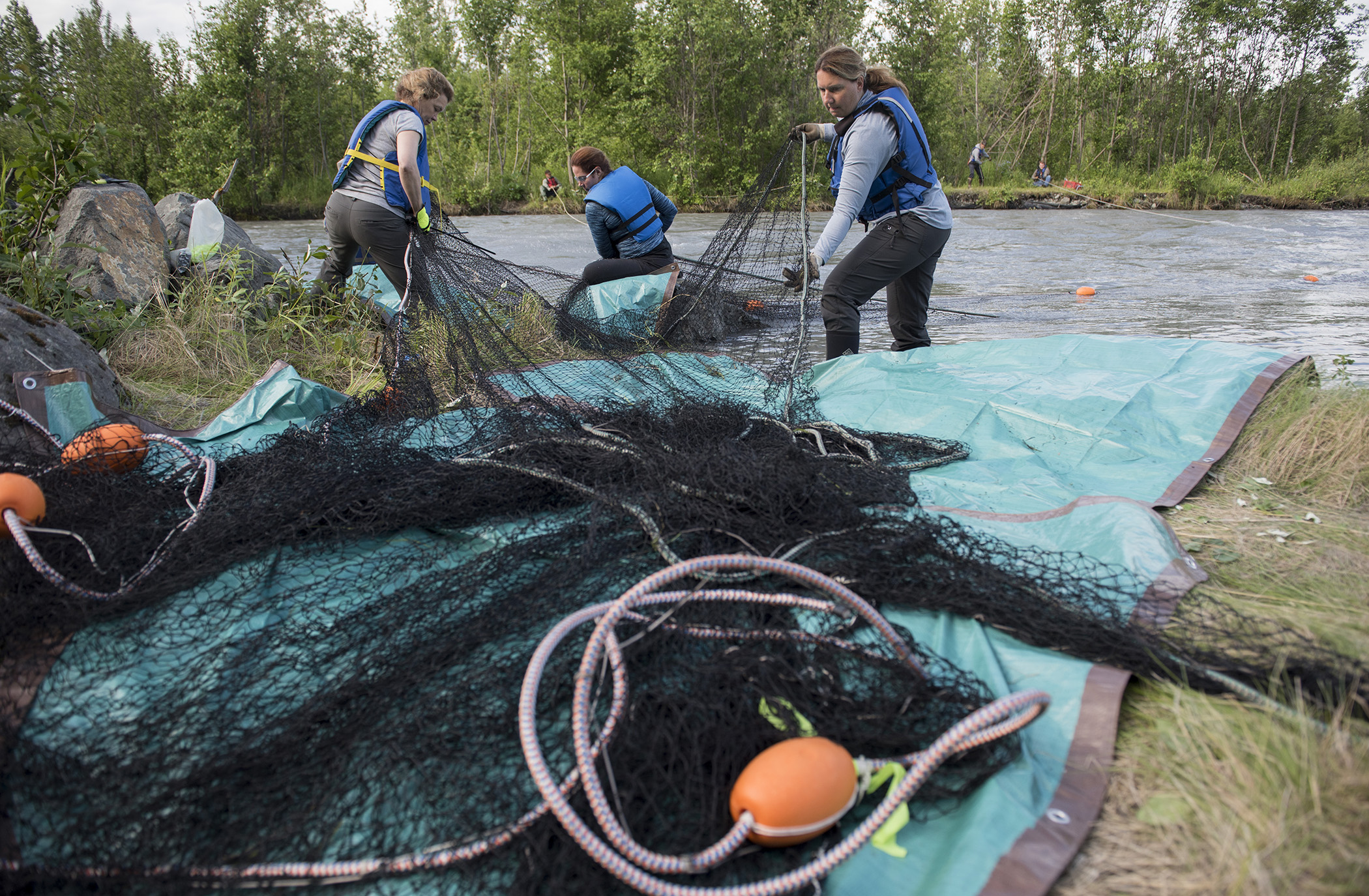 AERC staff deploy barrior netting in the Eagle River