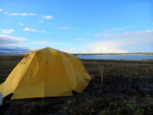 North Slope Biologists Make Room For The Loons News University Of Alaska Anchorage